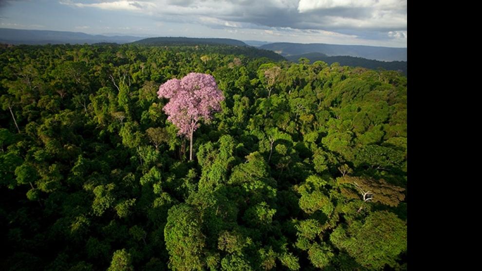 Projeto Ferro Carajás vai deixar legado ambiental na Amazônia
